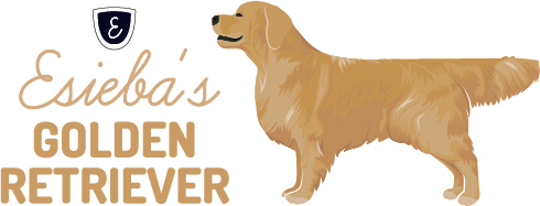 Esieba's Golden Retriever